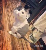 Стрижка кота/кошки
